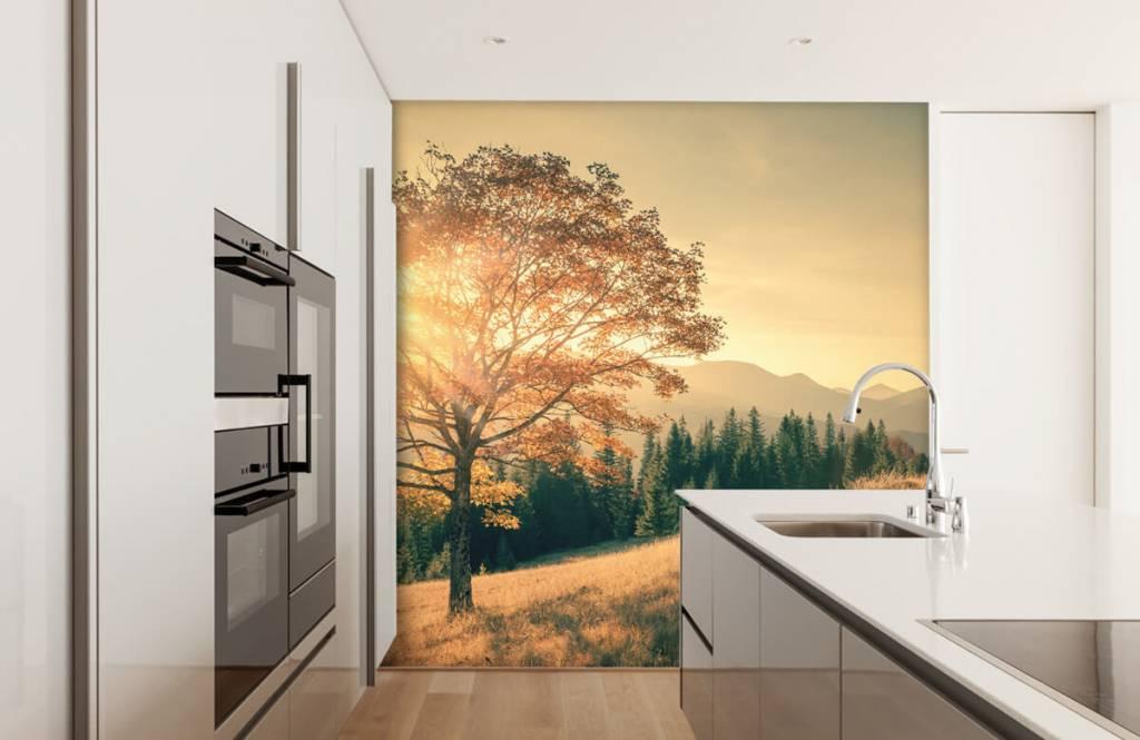 Bos behang - Zonsondergang in een vallei - Slaapkamer 2