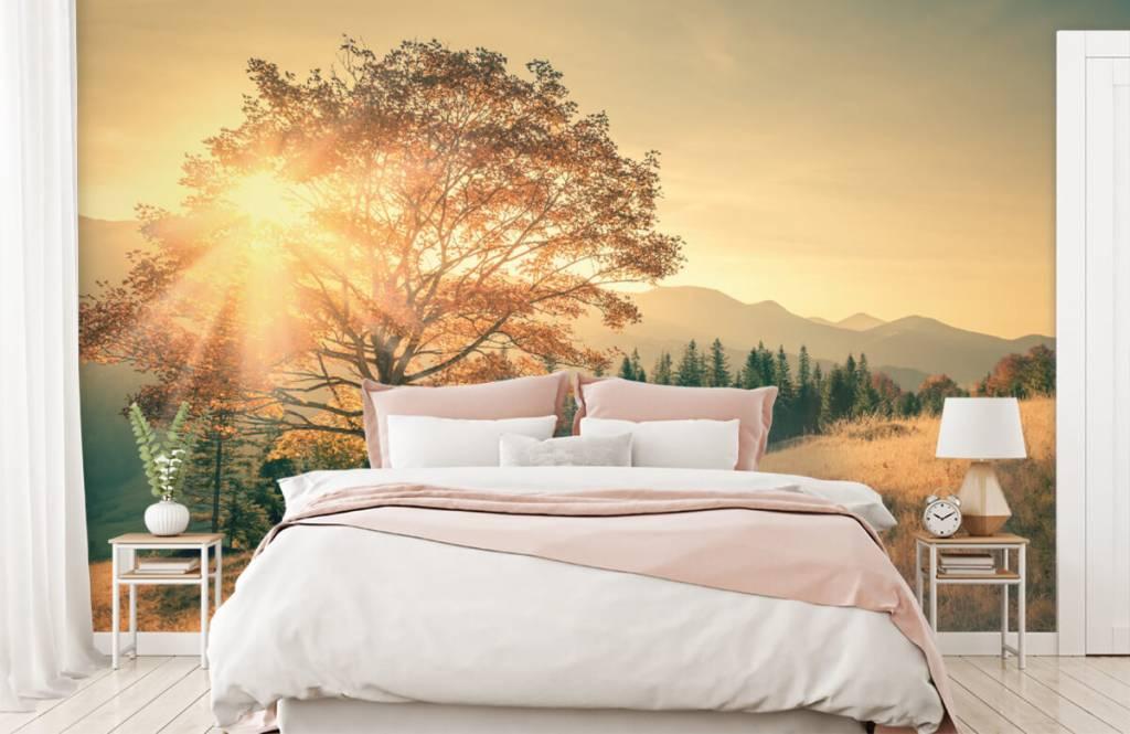 Bos behang - Zonsondergang in een vallei - Slaapkamer 4