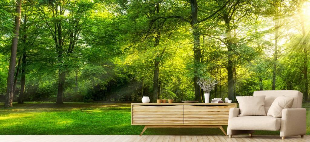 Zon - Groen woud - Verkoopafdeling 4