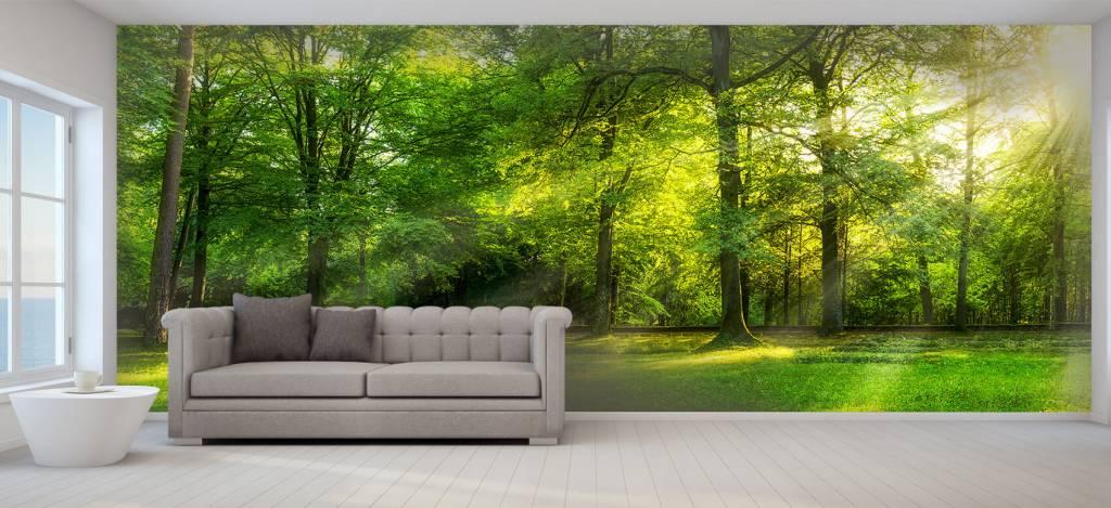 Zon - Groen woud - Verkoopafdeling 6