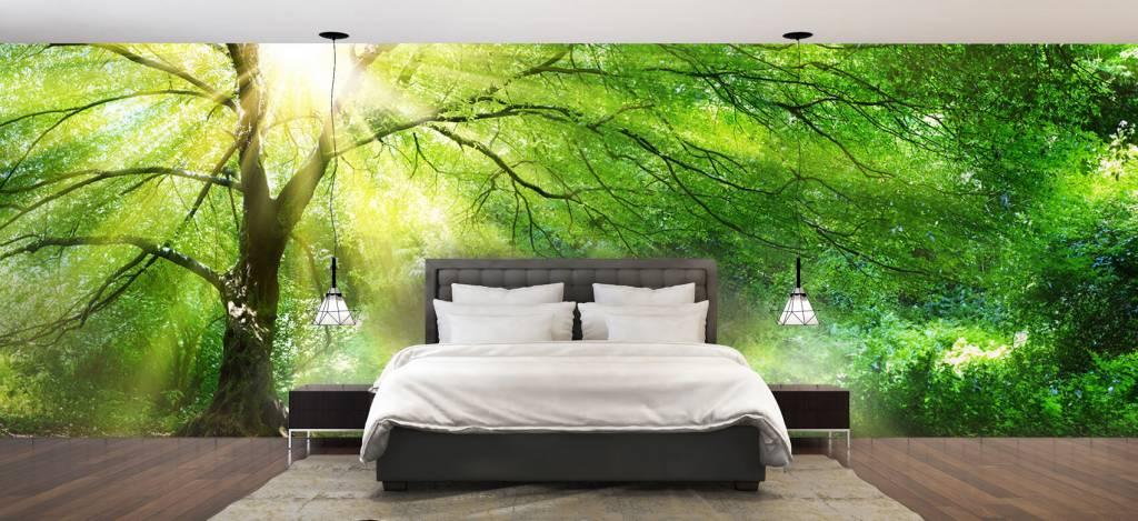 Bomen - Grote boom met zon - Directie 1