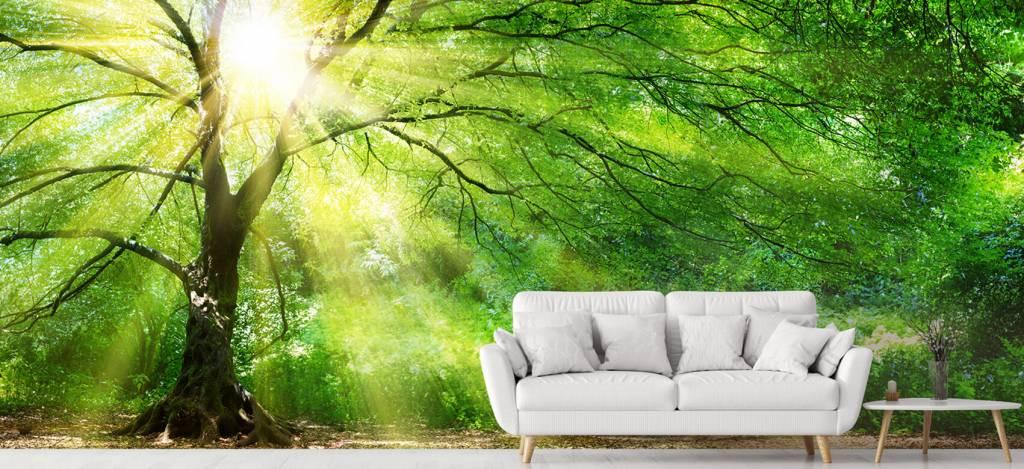 Bomen - Grote boom met zon - Directie 3