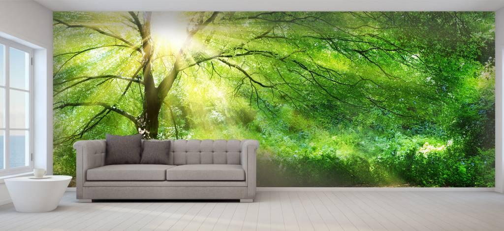 Bomen - Grote boom met zon - Directie 5