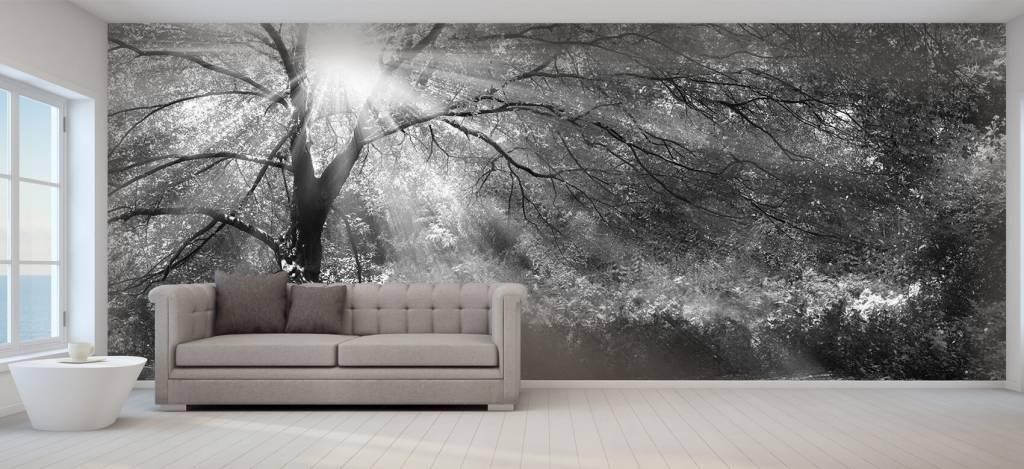 Bomen - Grote boom met zon - Directie 6