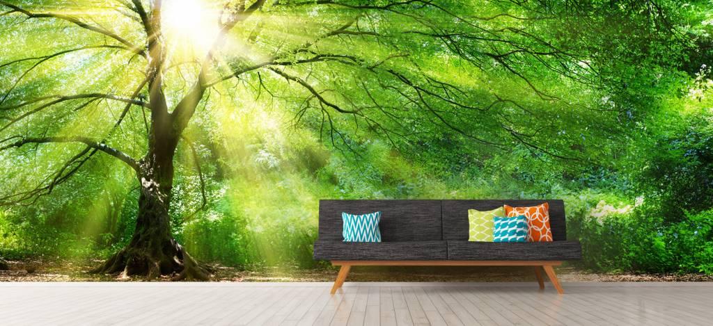 Bomen - Grote boom met zon - Directie 9