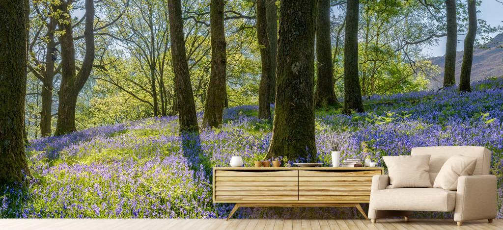 Bos behang - Lentepanorama in een bos - Ontvangstruimte 5