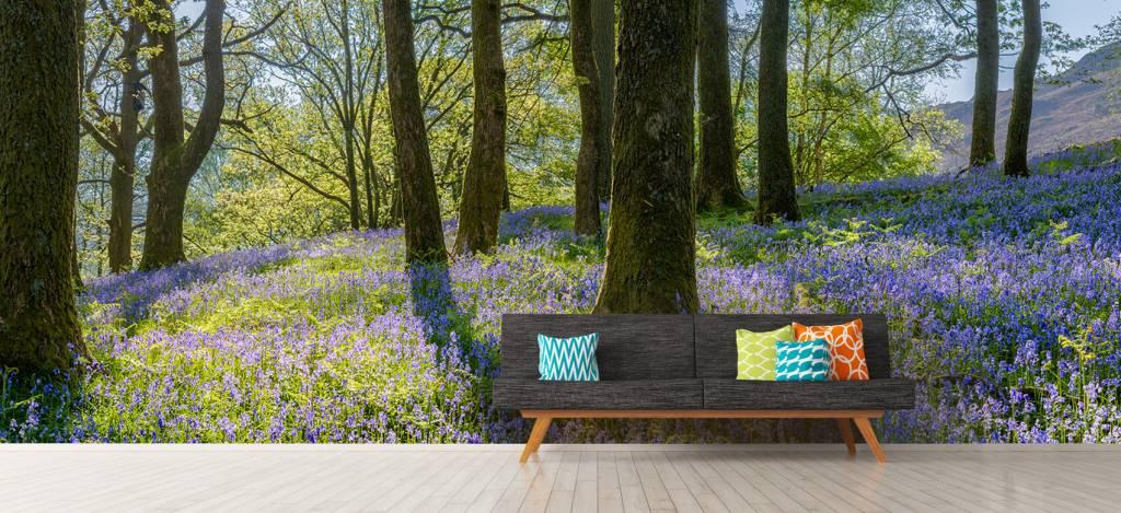 Bos behang - Lentepanorama in een bos - Ontvangstruimte 9