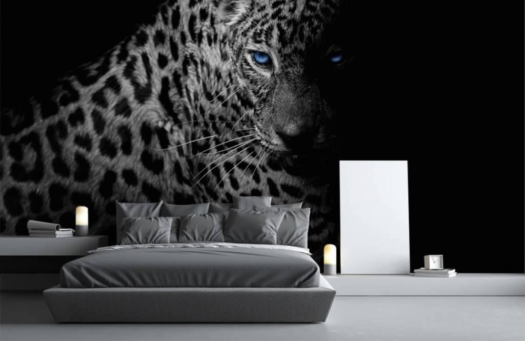 Tijgers & Leeuwen - Luipaard op zwarte achtergrond - Tienerkamer 1