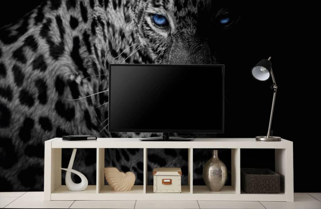 Tijgers & Leeuwen - Luipaard op zwarte achtergrond - Tienerkamer 3