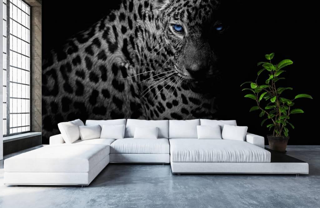 Tijgers & Leeuwen - Luipaard op zwarte achtergrond - Tienerkamer 4