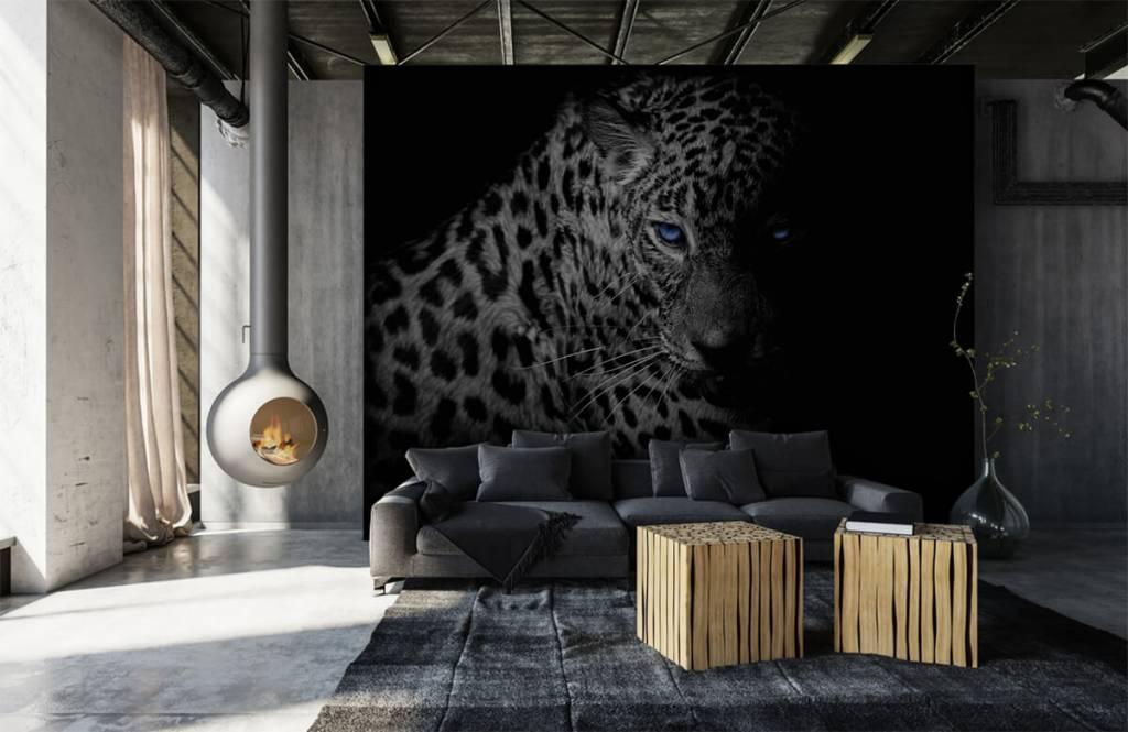 Tijgers & Leeuwen - Luipaard op zwarte achtergrond - Tienerkamer 5