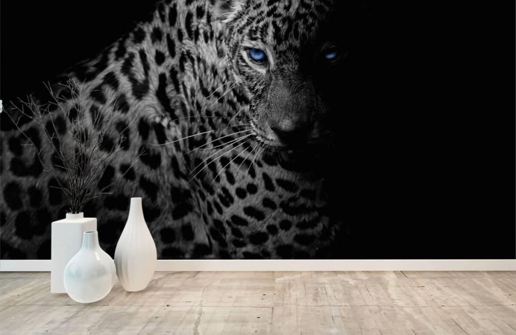 Tijgers & Leeuwen - Luipaard op zwarte achtergrond - Tienerkamer 7