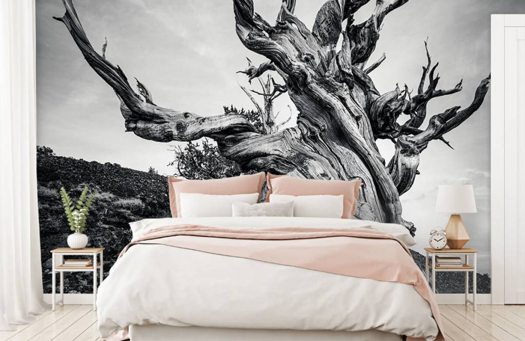 Bomen - Methusalem boom - Kantoor 1