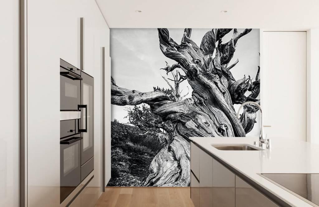 Bomen - Methusalem boom - Kantoor 7