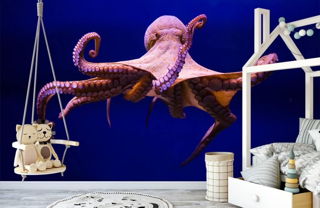 Zeedieren - Octopus - Hal 1
