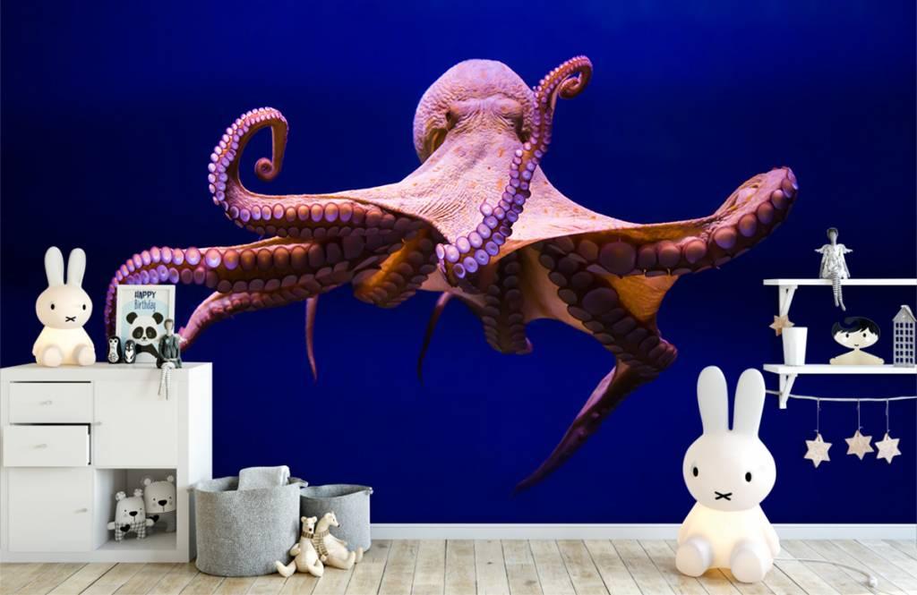 Zeedieren - Octopus - Hal 3