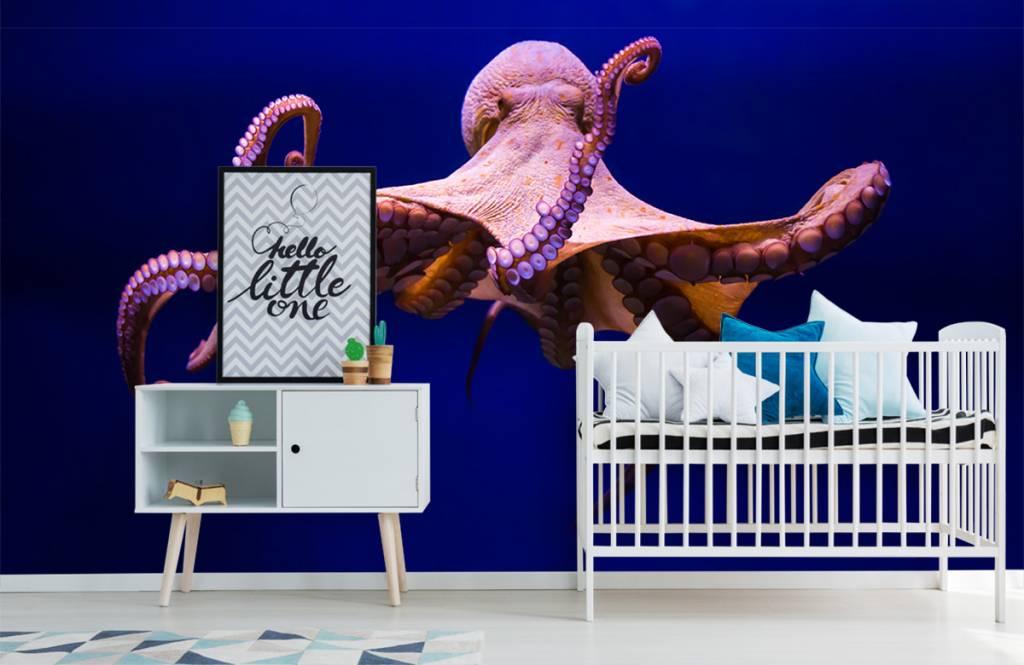 Zeedieren - Octopus - Hal 4