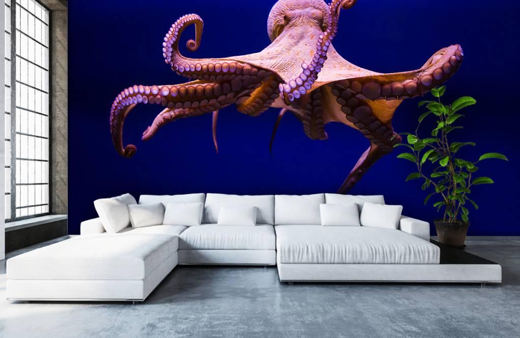Zeedieren - Octopus - Hal 7