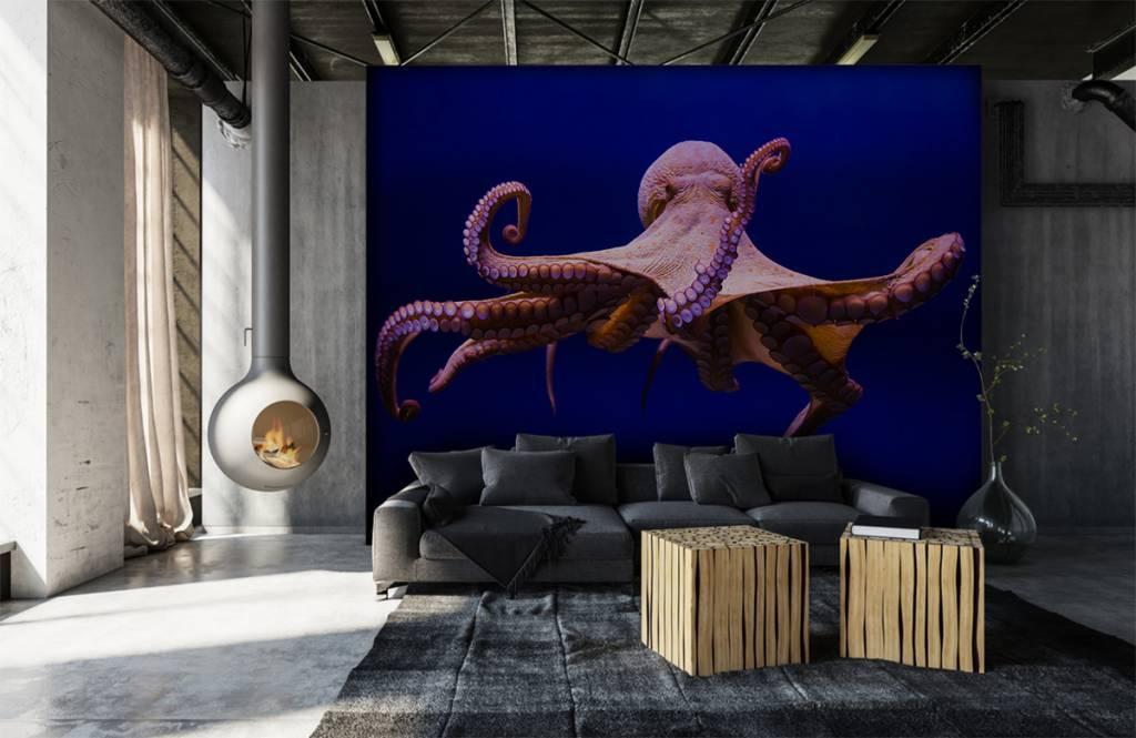 Zeedieren - Octopus - Hal 8