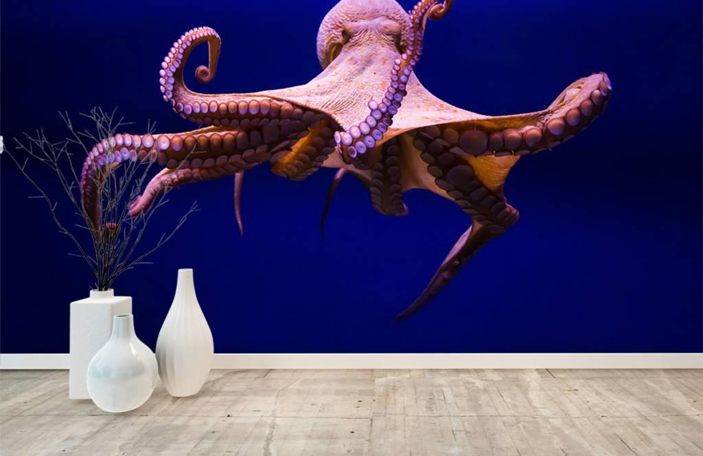 Zeedieren - Octopus - Hal 9