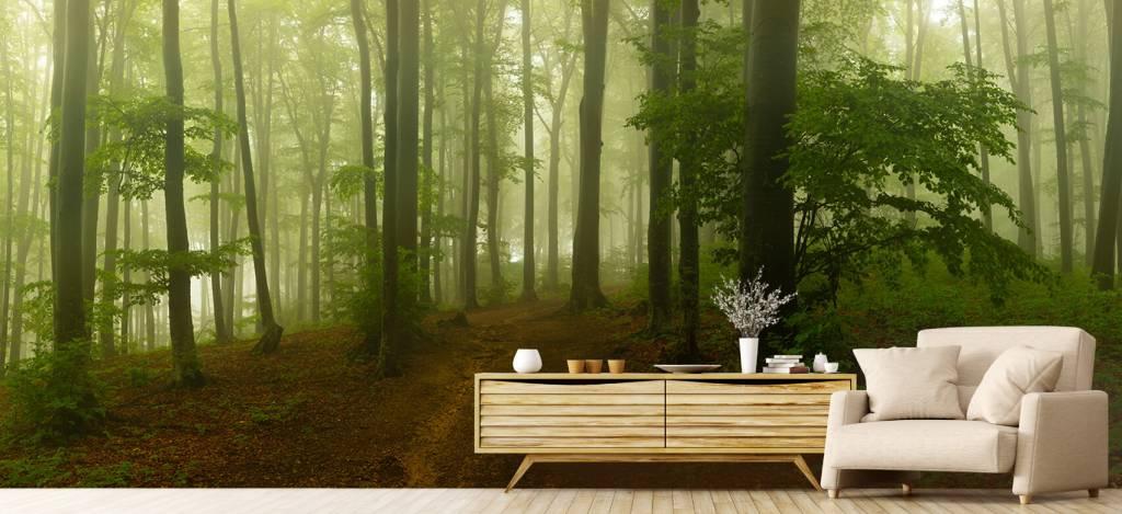Bos behang - Pad door mistig groen bos - Kantoor 5