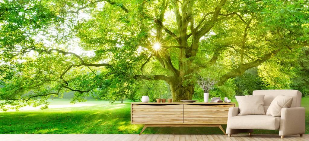 Bomen - Plataan boom - Ontvangstruimte 5