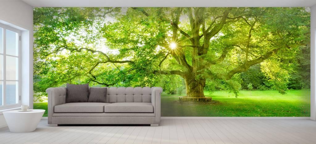Bomen - Plataan boom - Ontvangstruimte 6
