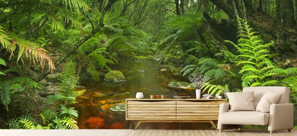 Bomen - Riviertje in het regenwoud - Hobbykamer 1
