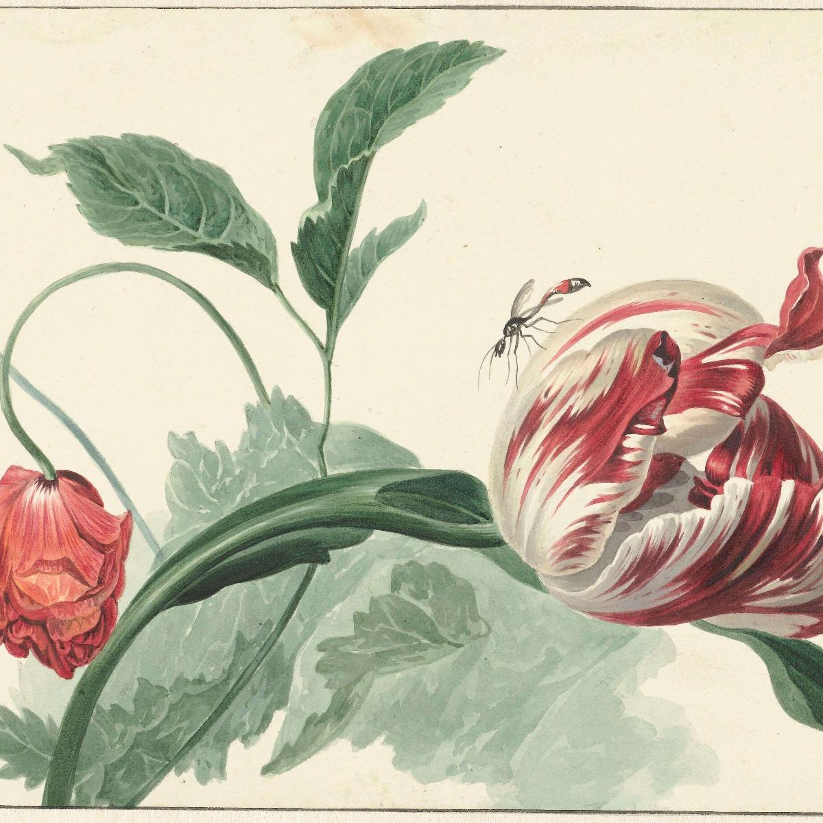 Kunst Tulp en een papaver, Willem van Leen 12