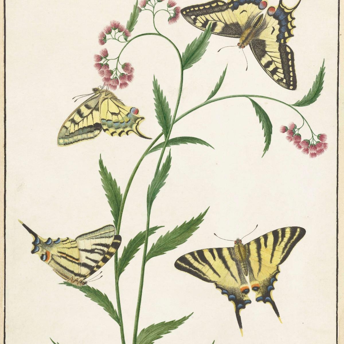 Kunst Vier vlinders op bloemen, Paulus Knogh 16