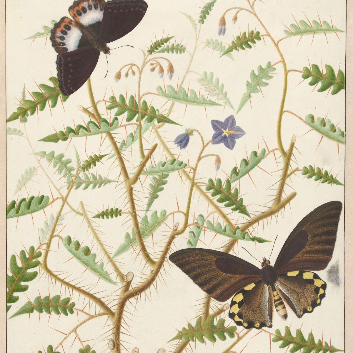 Kunst Een bloesemende struik met twee uitheemse vlinders 16