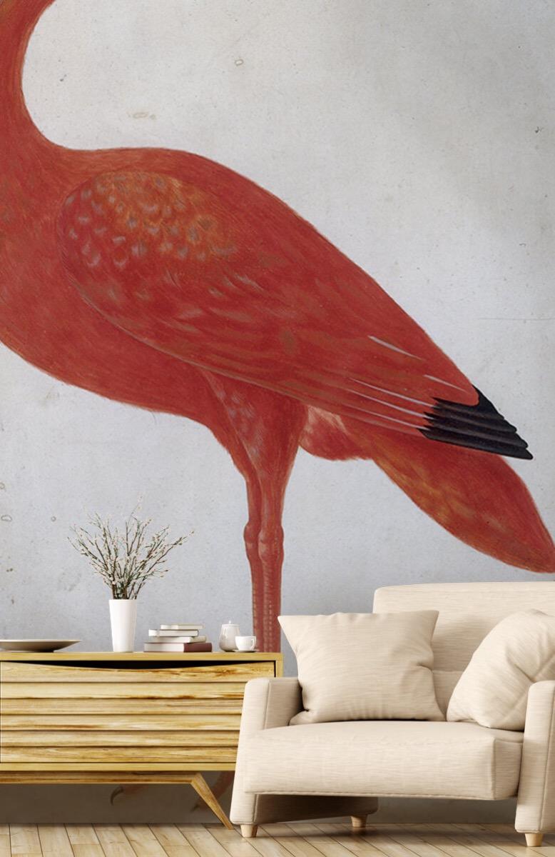 Overige - Rode Ibis met een ei - Keuken 1