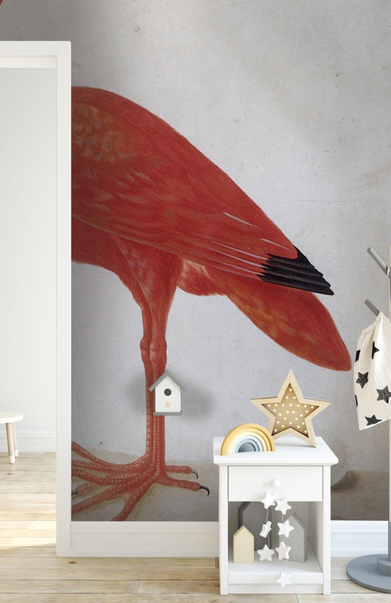 Overige - Rode Ibis met een ei - Keuken 6