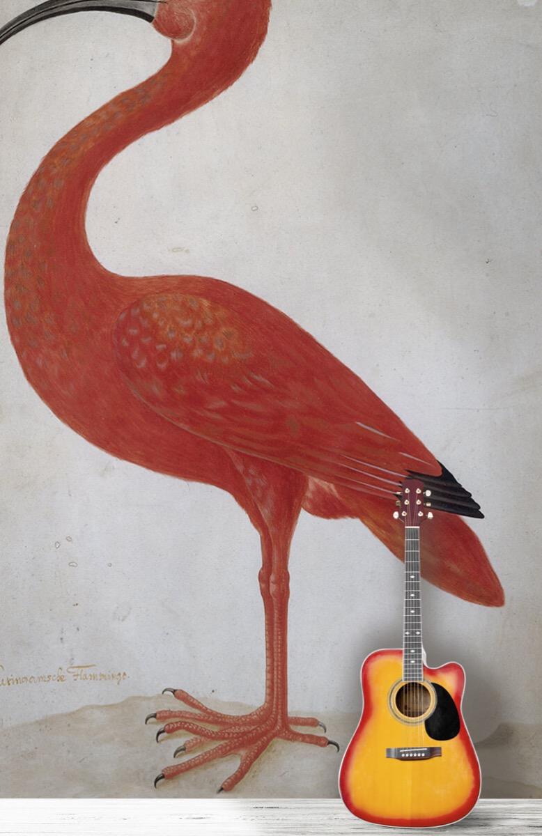 Overige - Rode Ibis met een ei - Keuken 11
