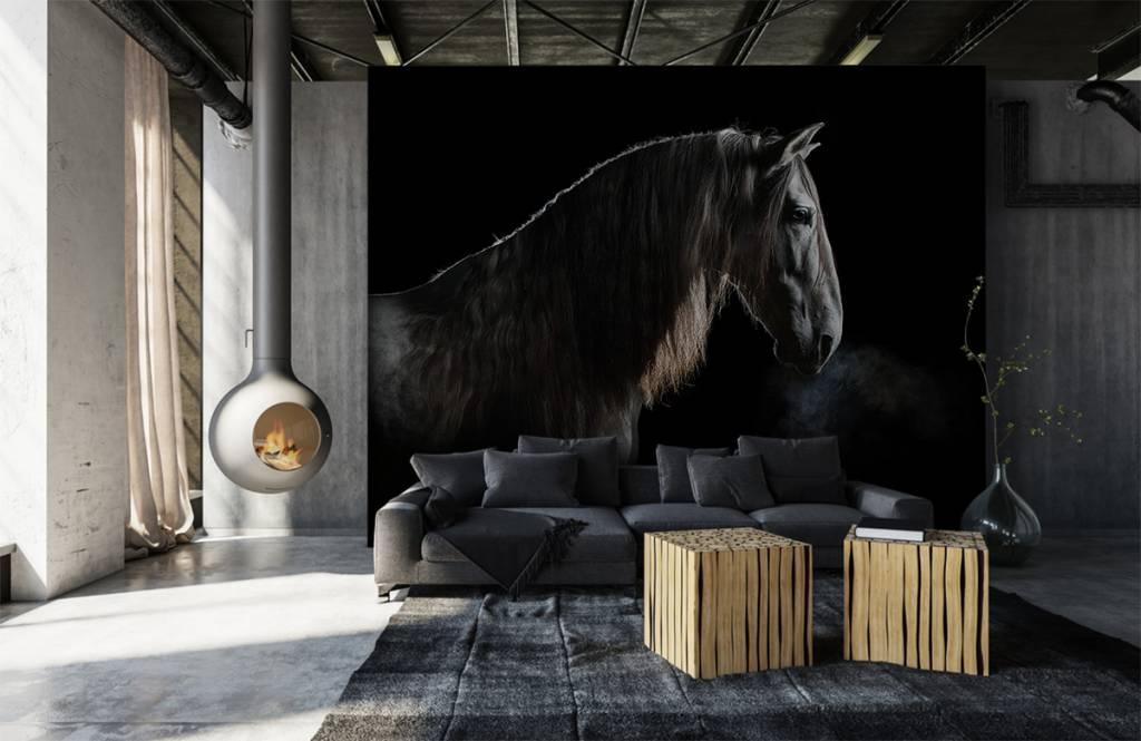 Paarden - Schimmel met zwarte achtergrond - Tienerkamer 1