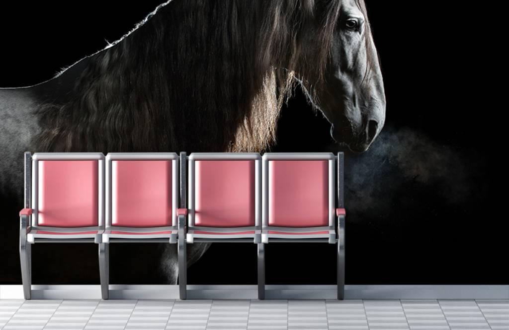 Paarden - Schimmel met zwarte achtergrond - Tienerkamer 3