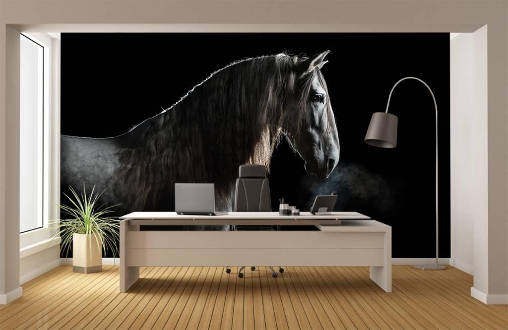 Paarden - Schimmel met zwarte achtergrond - Tienerkamer 4