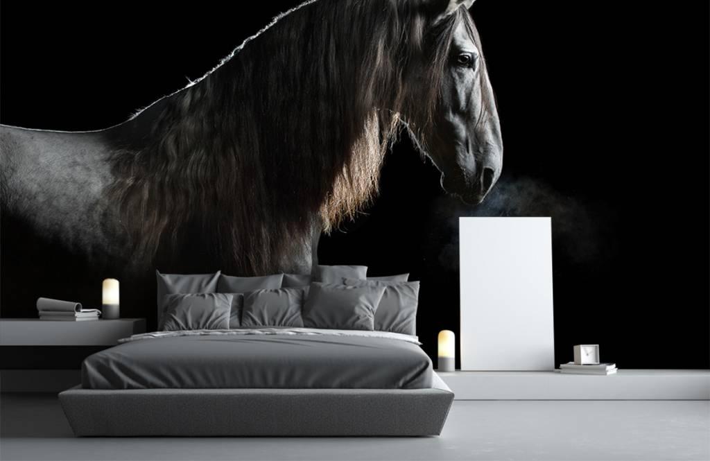 Paarden - Schimmel met zwarte achtergrond - Tienerkamer 5