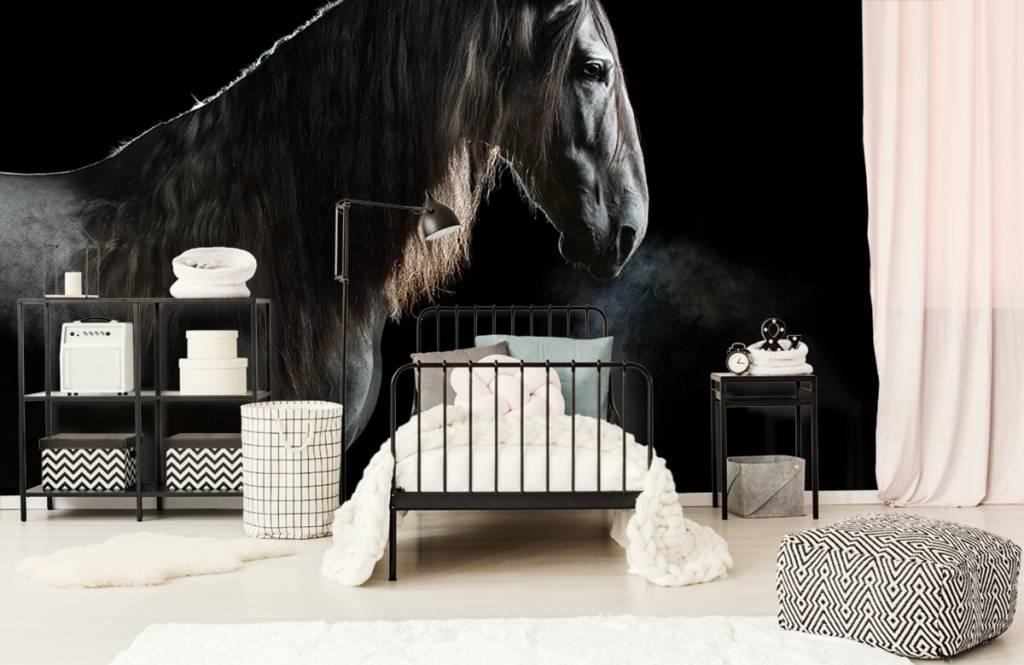 Paarden - Schimmel met zwarte achtergrond - Tienerkamer 7