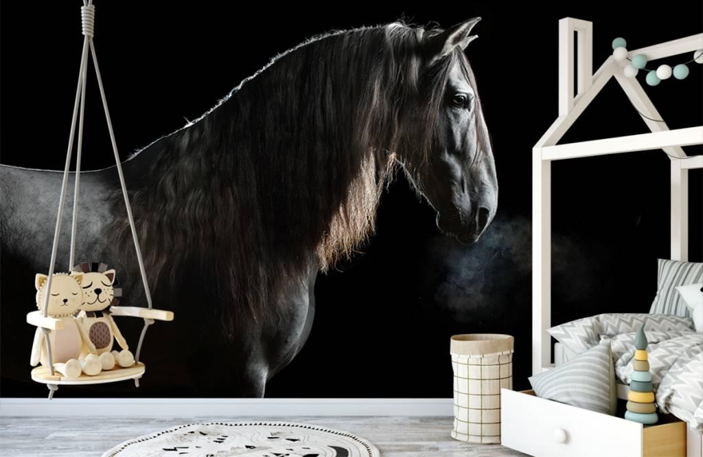 Paarden - Schimmel met zwarte achtergrond - Tienerkamer 8