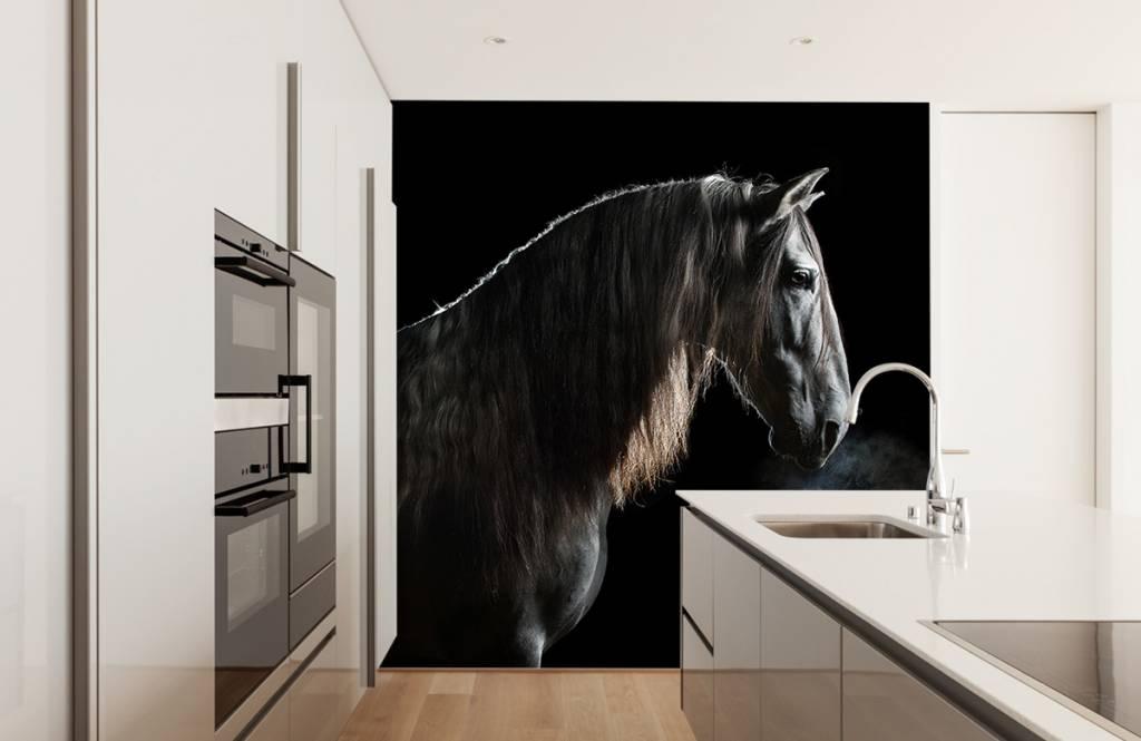 Paarden - Schimmel met zwarte achtergrond - Tienerkamer 9