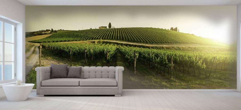 Landschap - Toscaanse wijngaard - Kantine 1