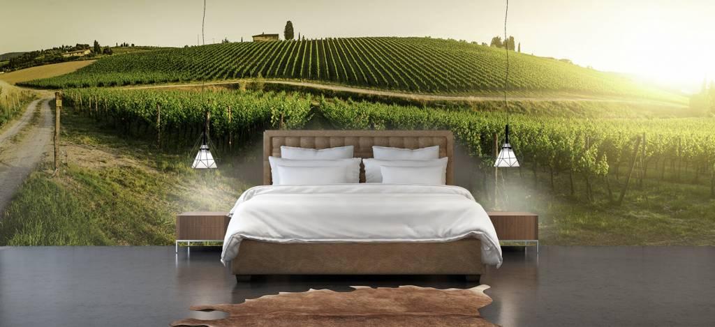Landschap - Toscaanse wijngaard - Kantine 3