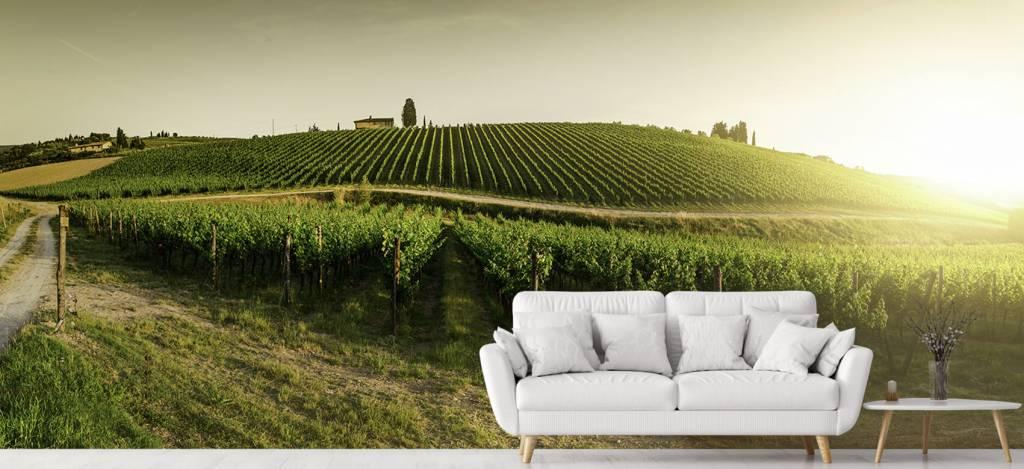 Landschap - Toscaanse wijngaard - Kantine 4