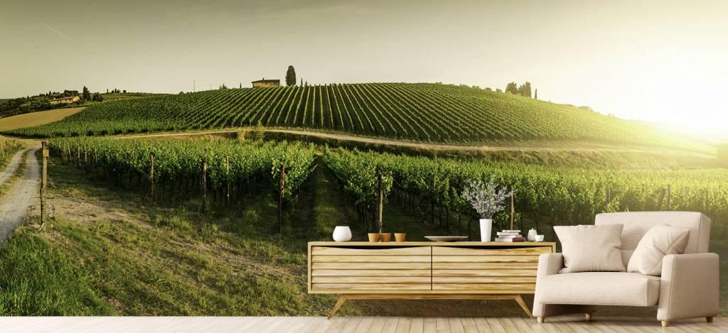Landschap - Toscaanse wijngaard - Kantine 5