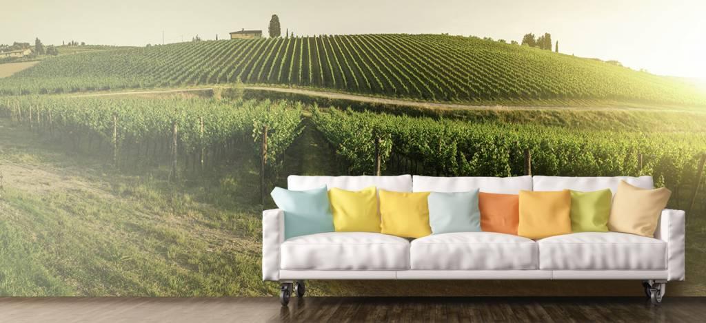 Landschap - Toscaanse wijngaard - Kantine 6