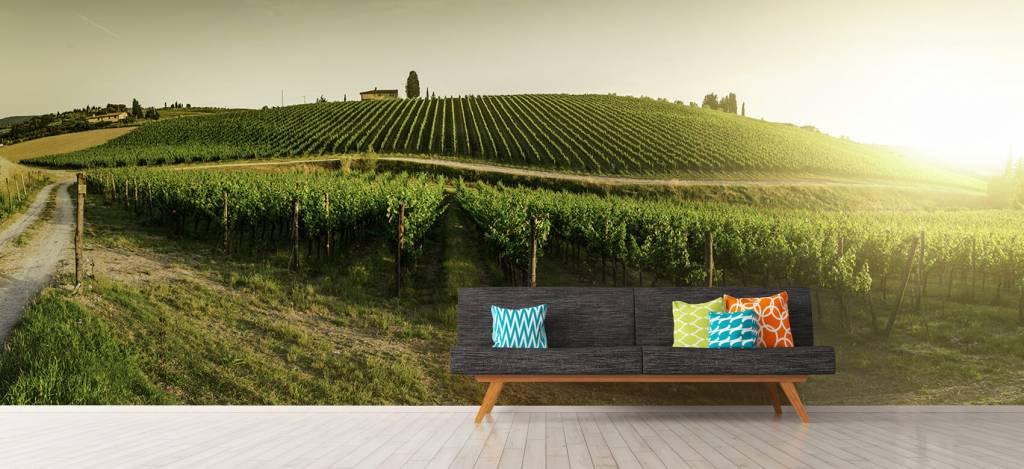 Landschap - Toscaanse wijngaard - Kantine 7