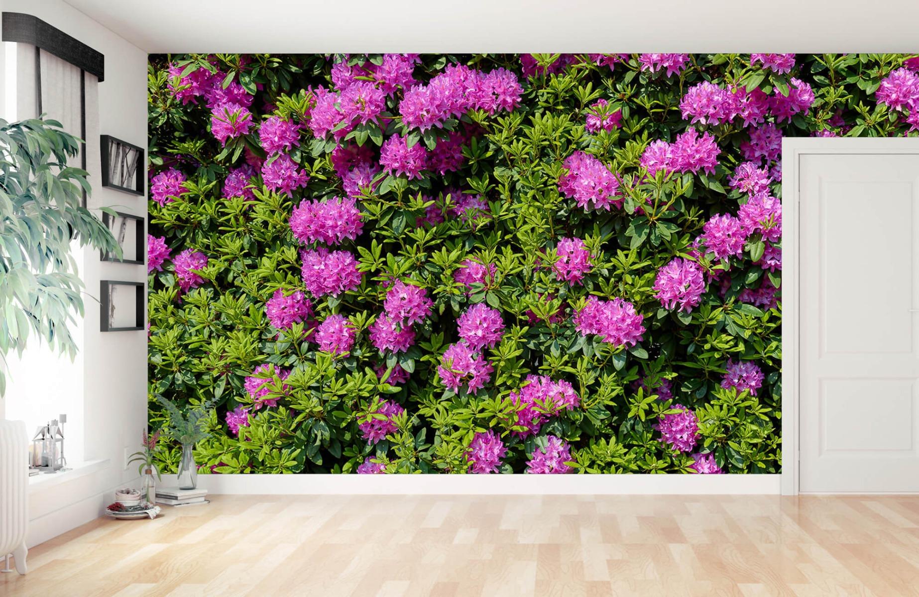 Bloemenvelden - Grote muur van rododendrons - Wallexclusive - Woonkamer 12