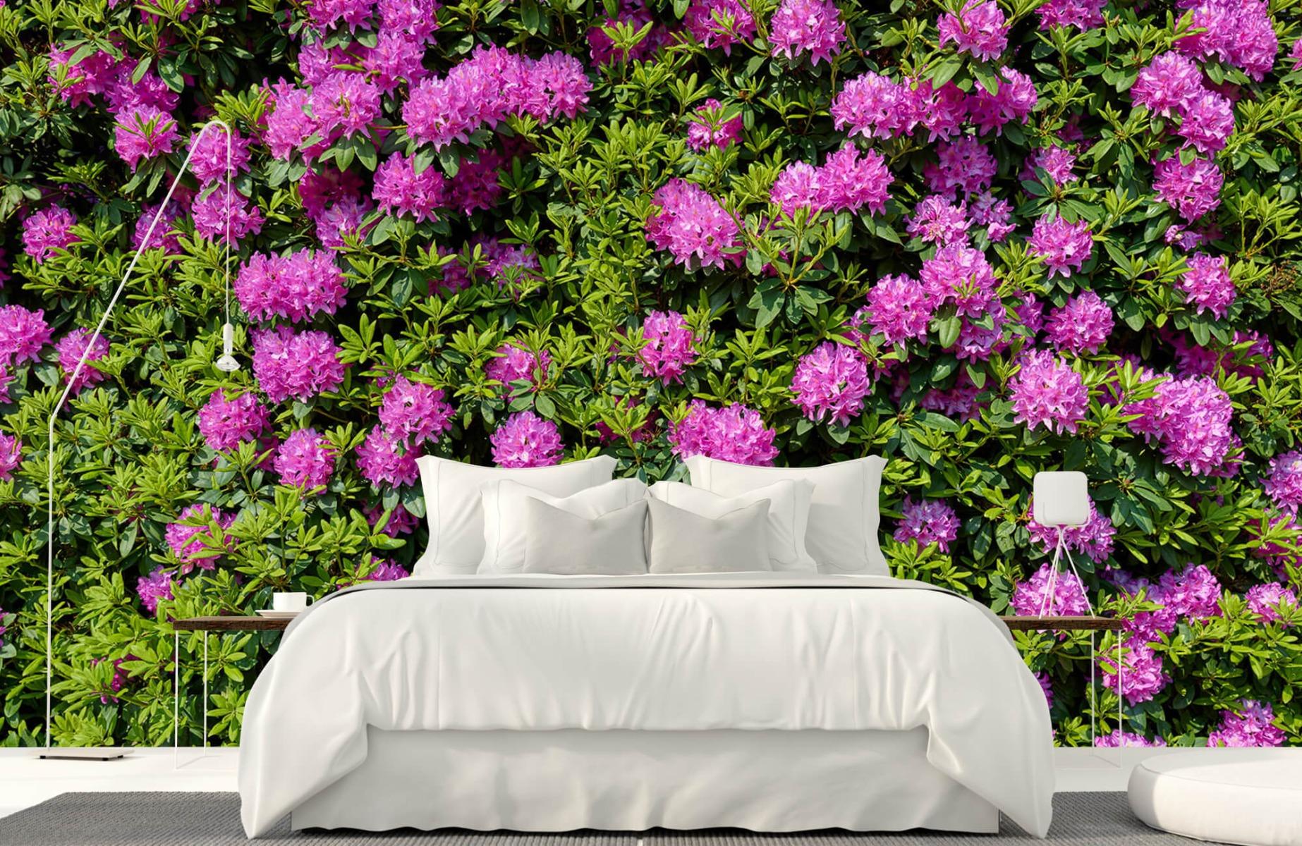 Bloemenvelden - Grote muur van rododendrons - Wallexclusive - Woonkamer 17