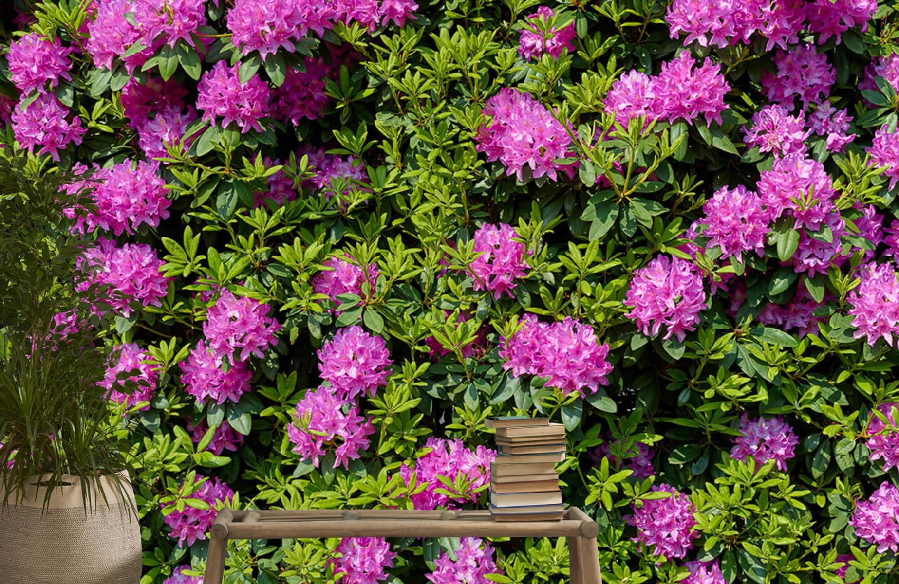 Bloemenvelden - Grote muur van rododendrons - Wallexclusive - Woonkamer 20